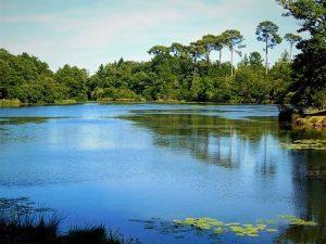 L'étang de Forges - Pontenx-les-Forges